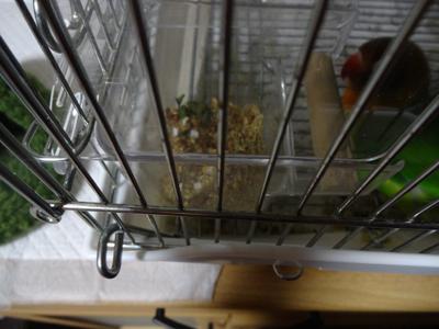 餌箱の小松菜を端へよけるモモ
