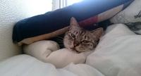 満足顔のネコ