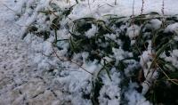 湿気をたくさん含んだ雪