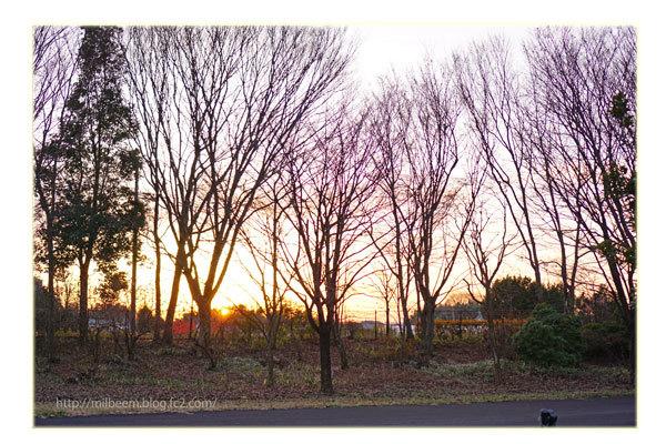 Yoko-OtibaHumi-DSC07911.jpg