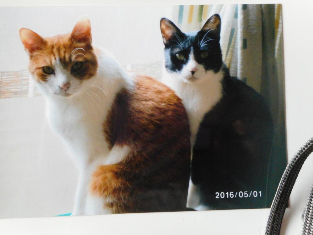 8歳の兄弟ネコ