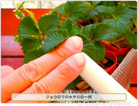 ペトさい(採種イチゴ・改)156