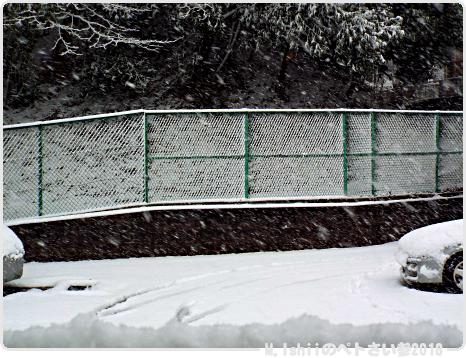 今日の雪見だいふく11-1