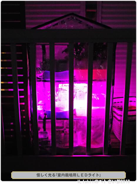 怪しく光る室内栽培用LEDライト01