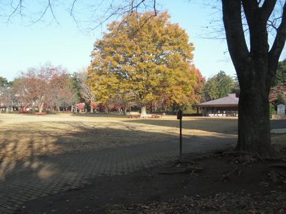 16 研修館 前の櫂(かい)の木