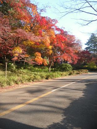 18 紅葉が美しい