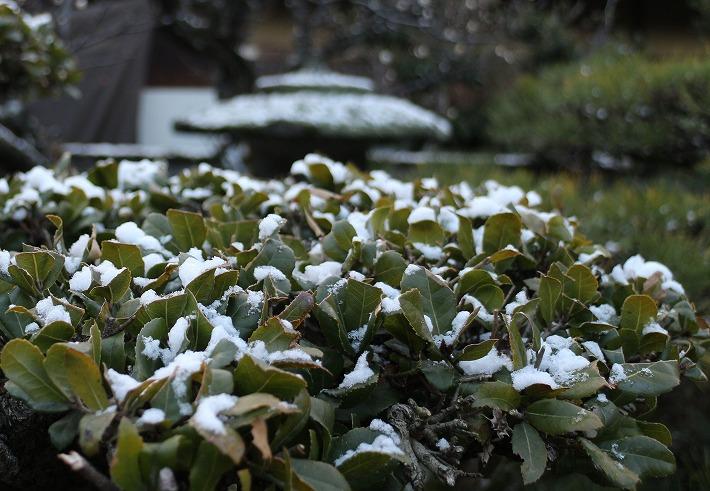 バベの上にの少し雪 30 2 13