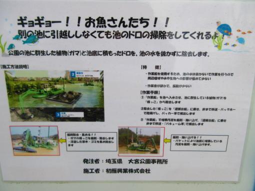 202池の掃除(1)
