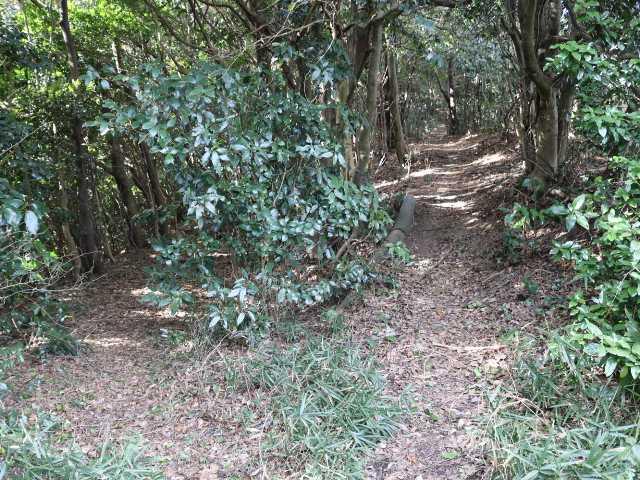IMG6651JPG高蔵山森林公園へ左