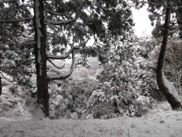 IMG3224JPG冠雪2