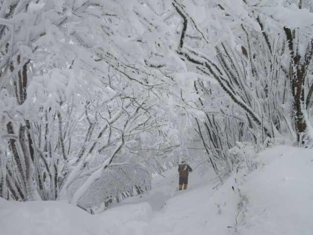 IMG3306JPG深雪を下る