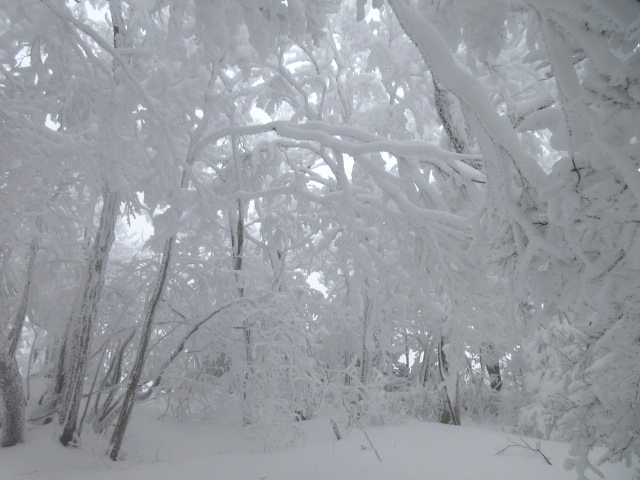 IMG3296JPG雪の遂道