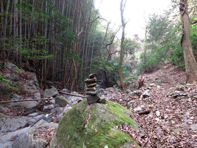 IMG3464JPG右岸を下る左竹林右雑木林