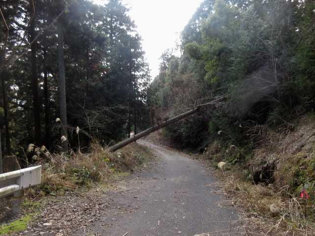 IMG3560JPG林道を下る大谷線