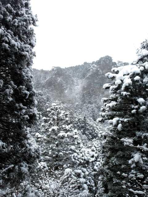 IMG3908JPG雪景
