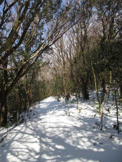 IMG4038PG雪原の縦走路