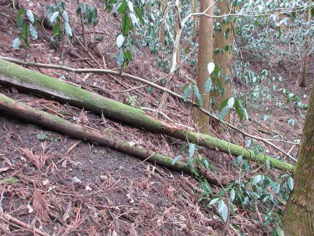 IMG4133JPG倒木の斜面