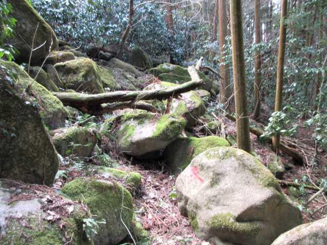 IMG4197JPG苔の岩