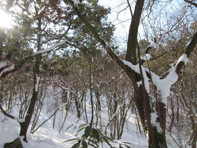 IMG4270JPG落雪
