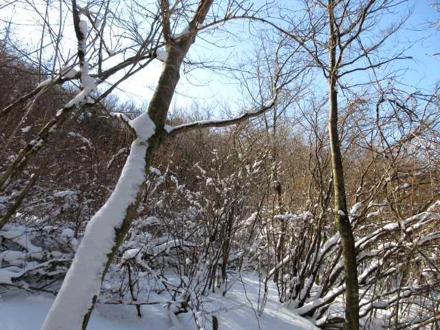 IMG4274JPG枝の雪2