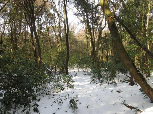 IMG4310JPG開けた雪原
