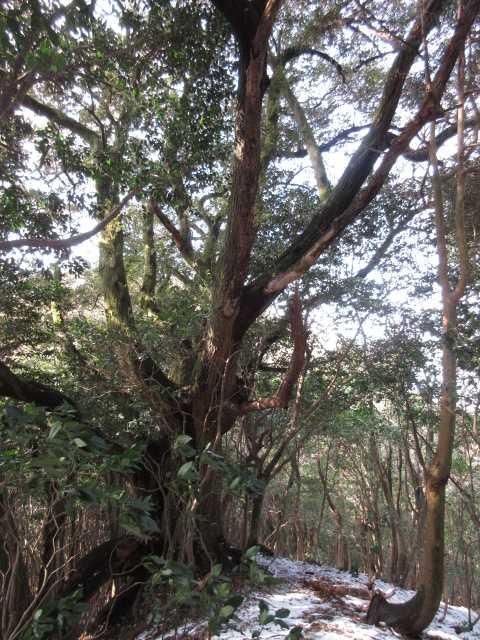 IMG4323JPG大樹