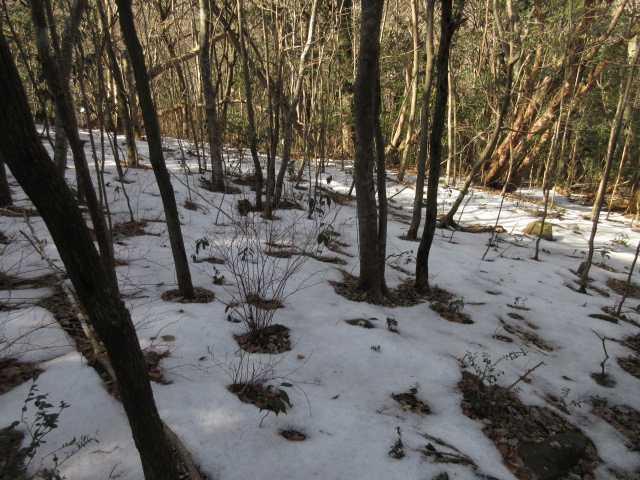 IMG4503JPG残雪の林
