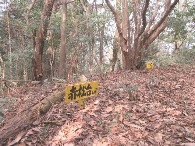 IMG4714JPG赤松台