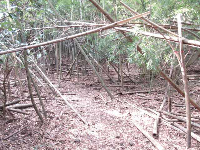IMG4723JPG竹林を歩く