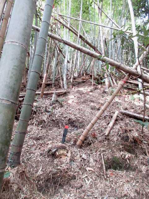IMG4727JPG竹林の急登