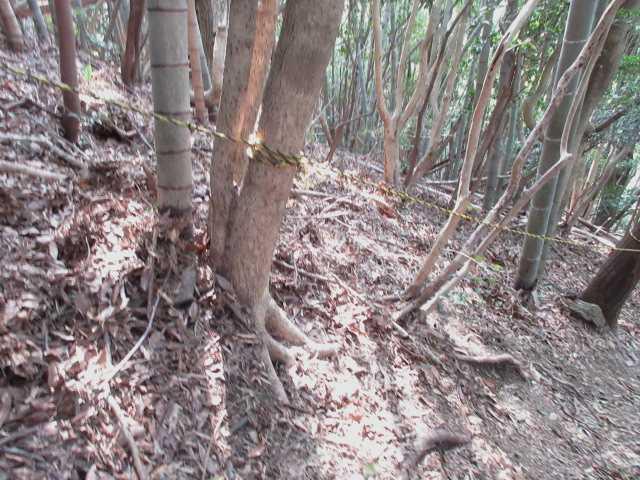 IMG4743JPG竹林の急坂