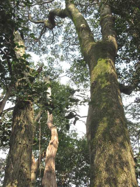 IMG4745JPG3種の樹木