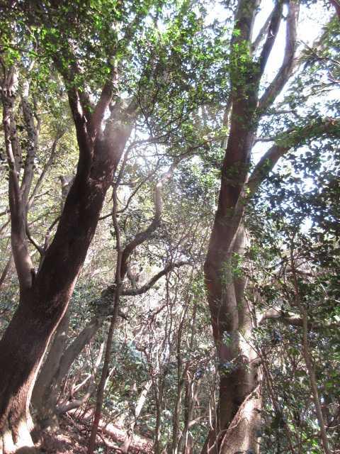 IMG4769JPG高木