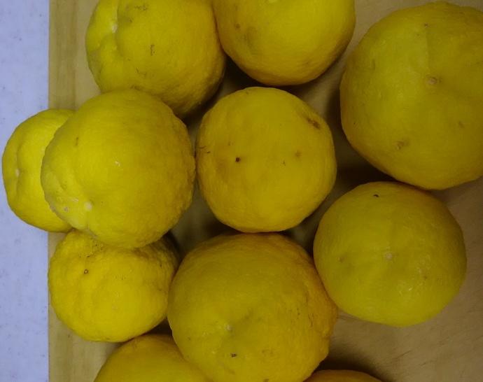 171130柚木 (1)