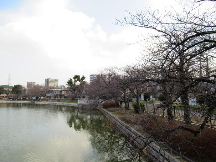 180119桜 (3)