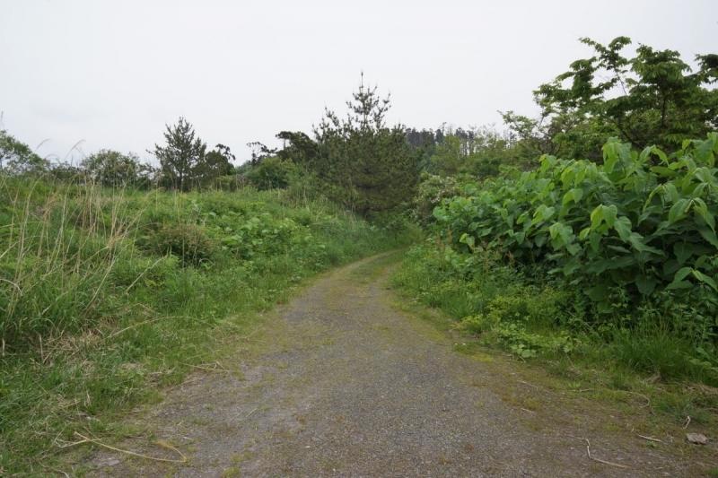 2道 (1200x800)