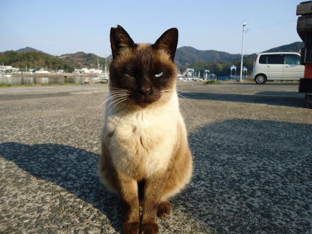shamuo0042.jpg