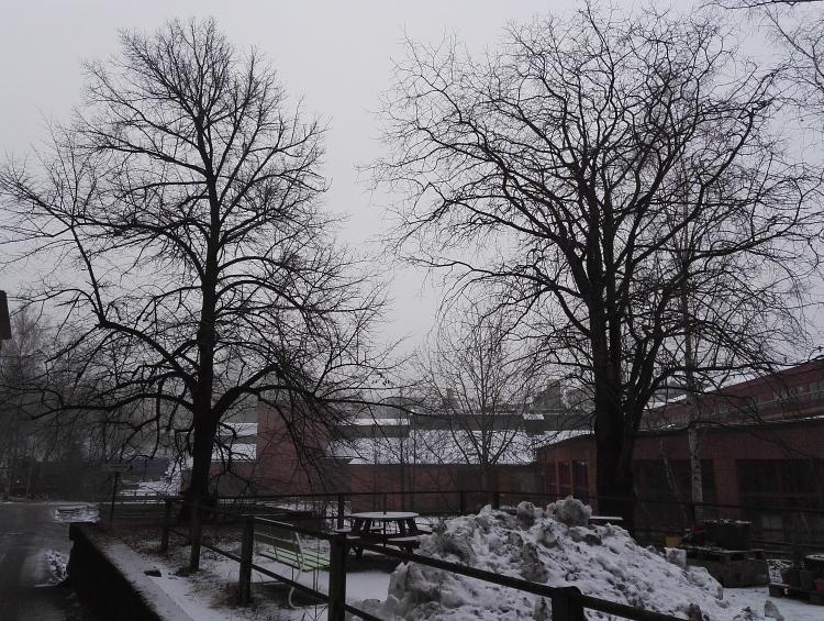 フィンランド 1月 どんより 曇り空