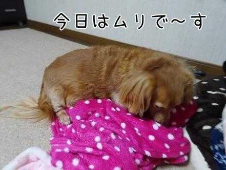 kinako8619.jpg