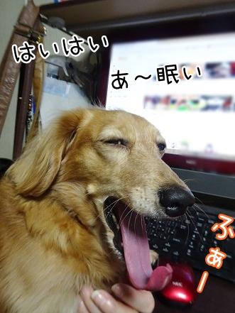 kinako8628.jpg