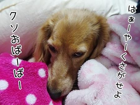 kinako8633.jpg