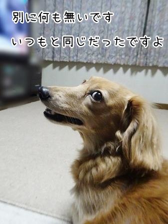 kinako8634.jpg