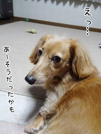 kinako8635.jpg