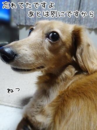 kinako8636.jpg
