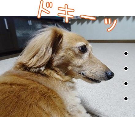 kinako8637.jpg