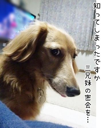 kinako8638.jpg