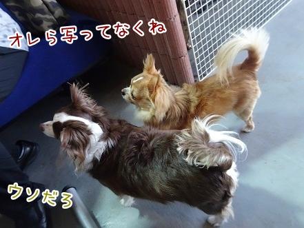 kinako8646.jpg