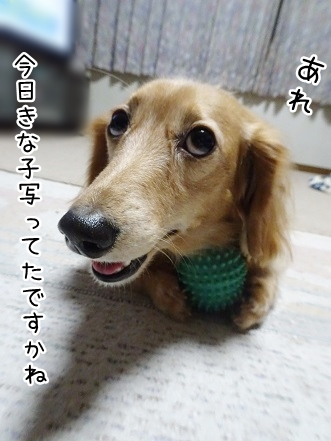kinako8650.jpg