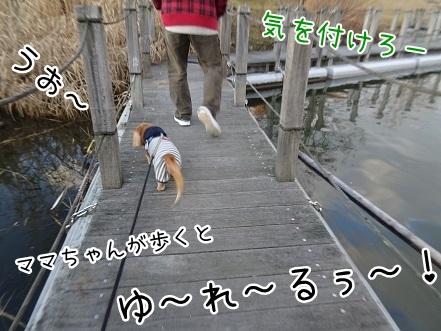kinako8656.jpg