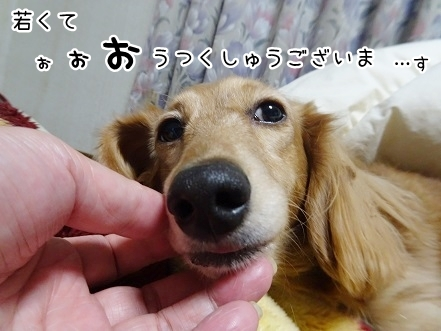 kinako8663.jpg
